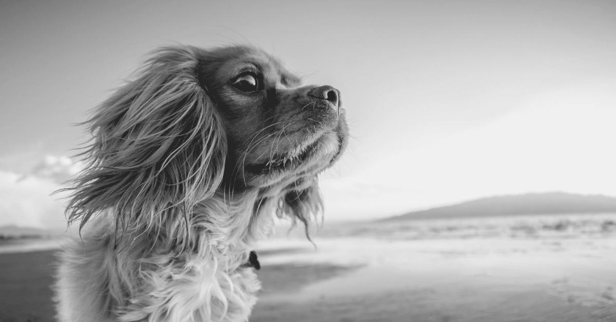 Dog Facts - Blog