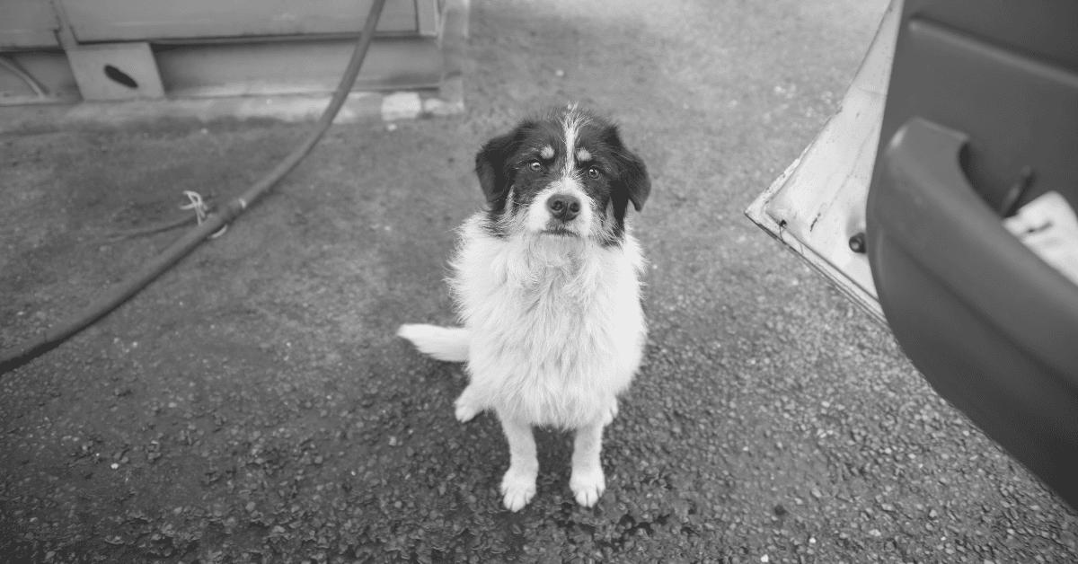 Dog Homelessness - Blog