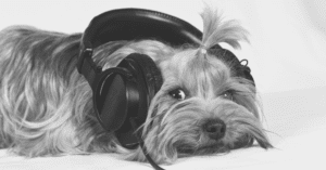Dog Podcasts - Blog