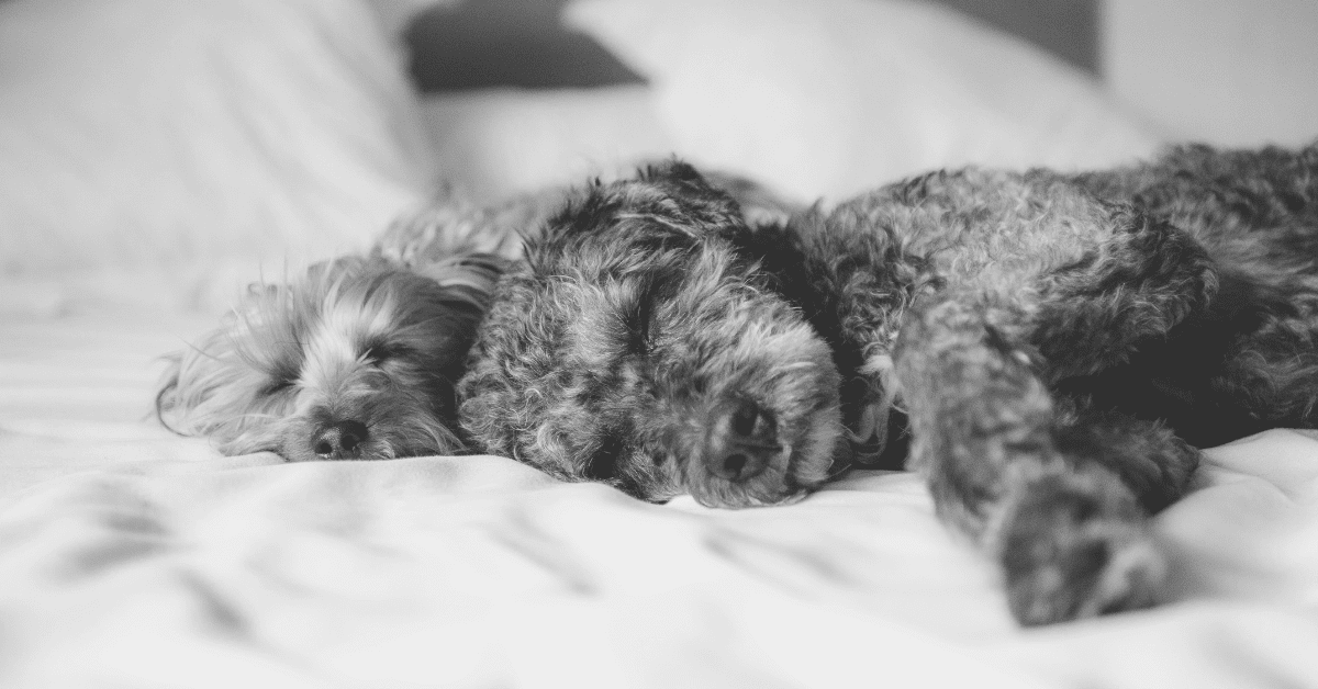 How Much Do Dogs Sleep and Should You Be Concerned?