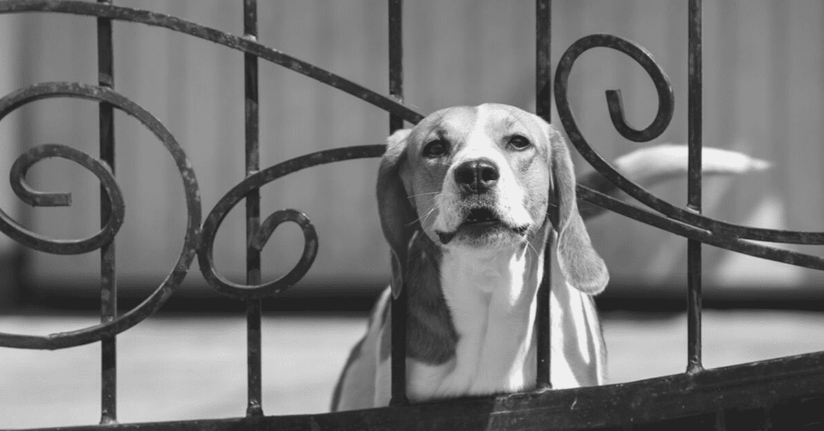 How to Stop Your Dog Barking (5 Tips For Owners)