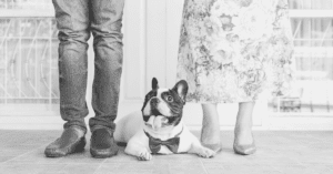 Is the French Bulldog a Good Family Dog?