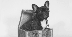 17 Gifts For French Bulldog Lovers