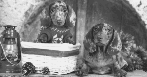 18 Gifts For Dachshund Lovers