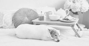 33 Unique Ways to Spoil Your Dog