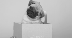 21 Intriguing Gifts For Pug Lovers - From Artwork to Stuffed Animals