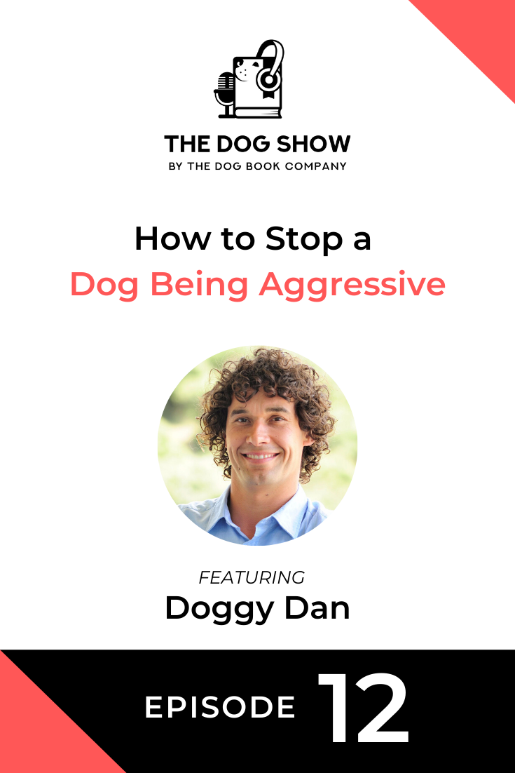 How to Stop a Dog Being Aggressive with Doggy Dan (Episode 12)