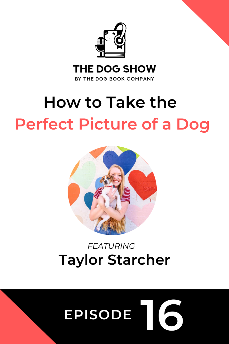 How to Take the Perfect Picture of a Dog with Taylor Starcher (Episode 16)