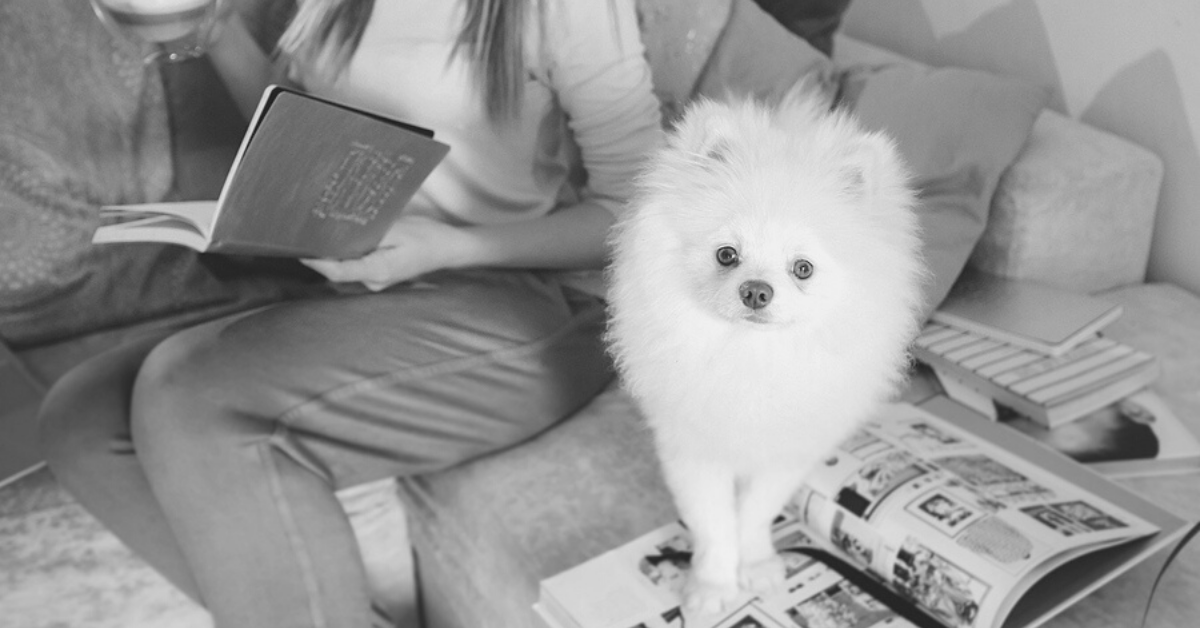 The 17 Best Dog Books For Gifting or Just Because