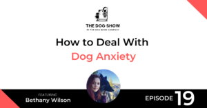 How to Deal With Dog Anxiety Featuring Bethany Wilson