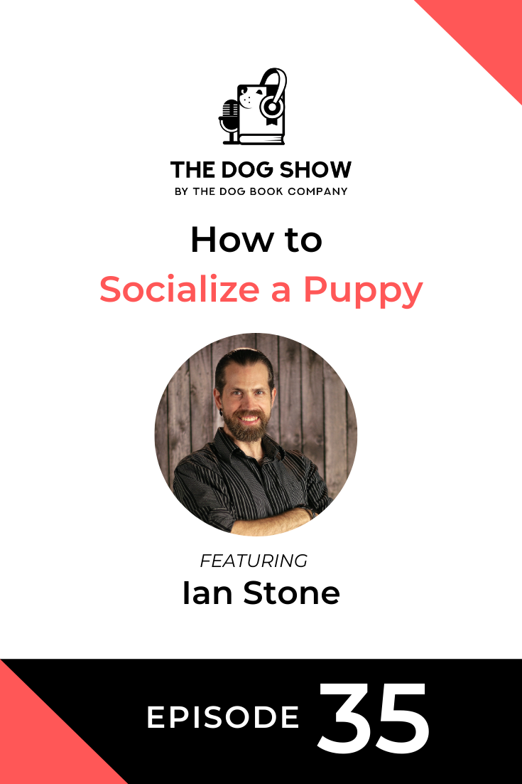 How to Socialize a Puppy with Ian Stone (Episode 35)