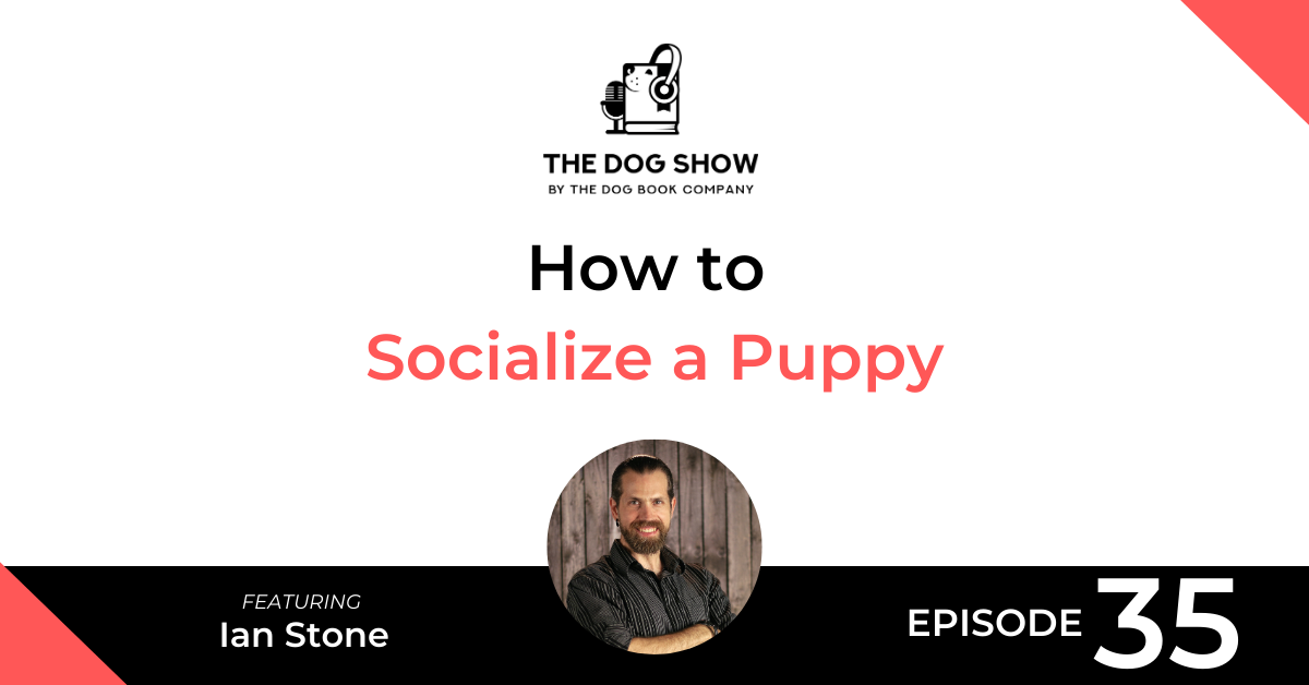 How to Socialize a Puppy with Ian Stone