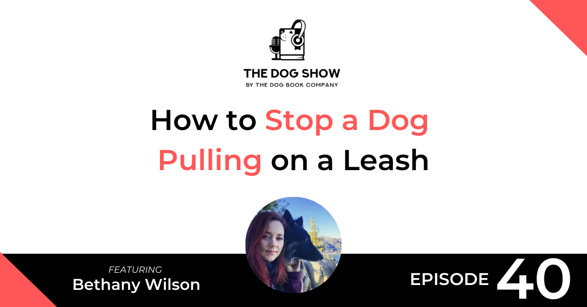 How to Stop a Dog Pulling on a Leash Featuring Bethany Wilson