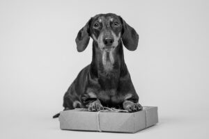 14 Amazing Pieces of Dachshund Stationery