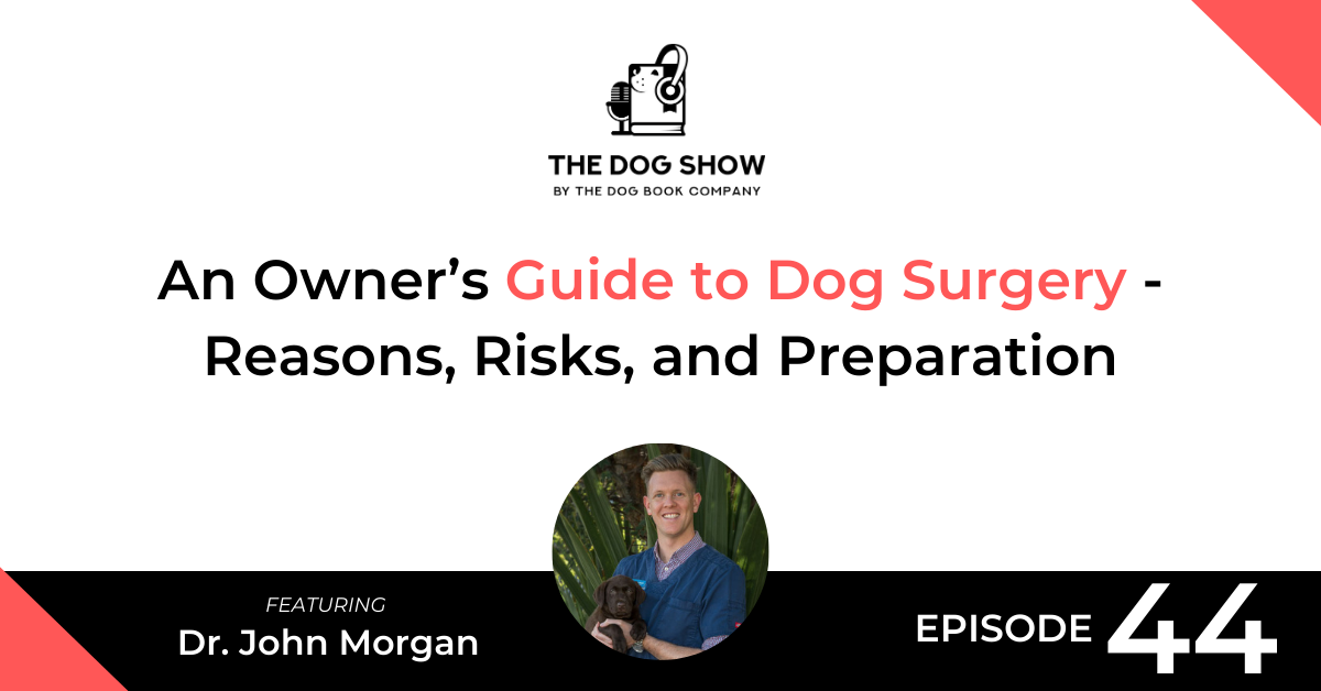 An Owner's Guide to Dog Surgery - Reasons, Risks, and Preparation