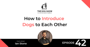 How to Introduce Dogs to Each Other with Ian Stone
