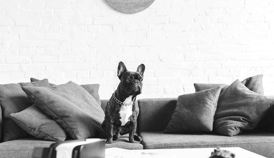 10 French Bulldog Decor Ideas For The Modern Home