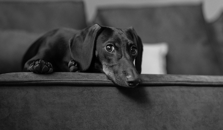 8 Dachshund Decor Ideas for a Sausage Dog Lover