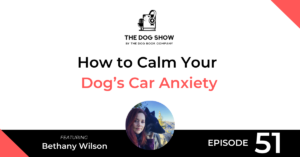 How to Calm Your Dog's Car Anxiety with Bethany Wilson - WebsiteFacebook