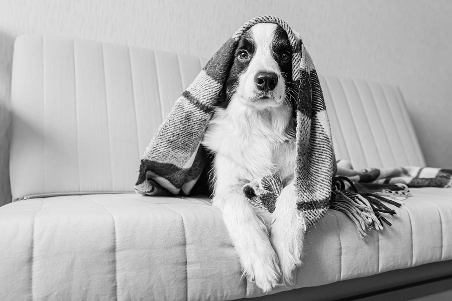 11 Cute and Quirky Dog Accessories for Home